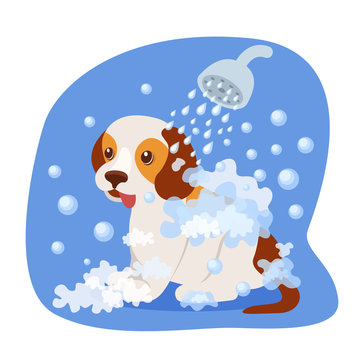 Bathing puppy in shower, with soapy water, health care, appearance.