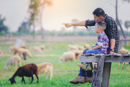 Father and son sitting looking away and pointing at sheep grazing on farm with sunset background