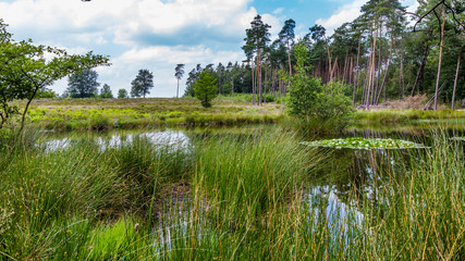 A beautiful little forest fen surrounded with trees near National park De Hoge Veluwe in the Netherlands