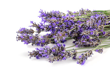 A closeup of a fresh bouquet of blooming lavender flowers on a white background with copy space