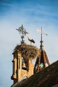 Young white stork (Ciconia ciconia) on a gable of a church roof, Eguisheim, Alsace, France, Europe