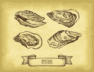 Hand drawn oysters set. Old craft paper texture background. Ribbon banner. Engraved style vector illustration. Template for your design works.