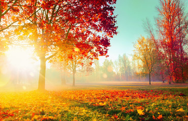 Spoed Foto op Canvas Meloen Autumn Landscape. Fall Scene. Trees and Leaves in Sunlight Rays