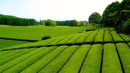 Beautiful fresh green tea plantation at Nihondaira, Shizuoka - Japan Wall mural