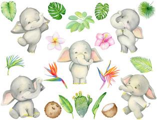 tropics, elephant cute, tropical plants, watercolor set.