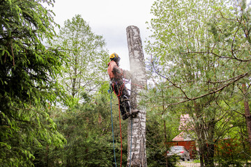 Specialist in the removal of trees.