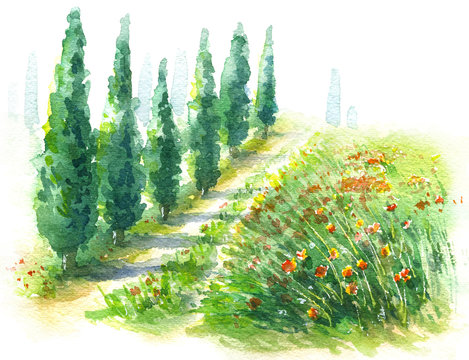 Watercolor Sketch Rural Scene with Cypress Trees and Poppies