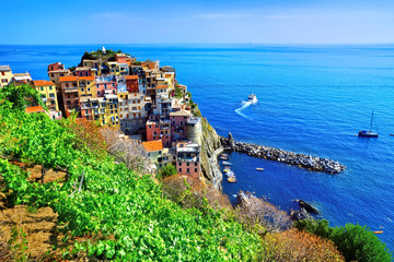 Fototapete - Cinque Terre village of Manarola, Italy. View of the colorful seaside village over vineyards.