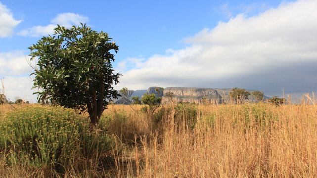 Natural Landscapes. View Of Blyde River Canyon And Tropical Savanna Field In South Africa