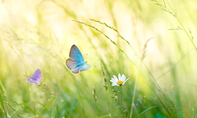 Wild flowers in the meadow with butterflies in sunny day.