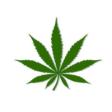 Cannabis Leaf Logo Design Inspiration-Vector