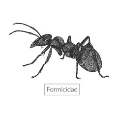 Macro image of detailed hand drawn ant