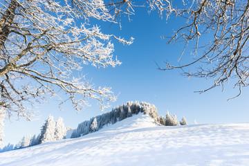 In a snowy forest in winter.