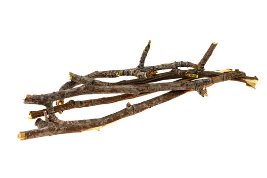 Dry tree twigs branches isolated on white background. close-up