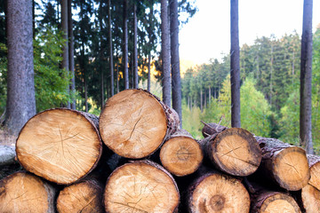 timber in the forest background