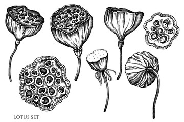 Vector set of hand drawn black and white lotus