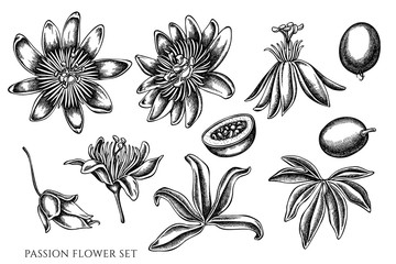 Vector set of hand drawn black and white passion flower