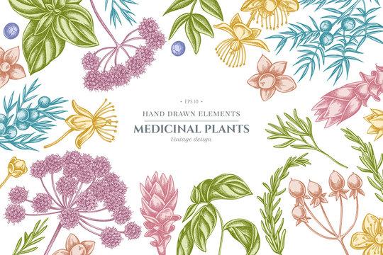 Floral design with pastel angelica, basil, juniper, hypericum, rosemary, turmeric