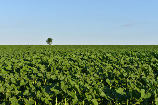 A field on which one tree grows, a summer landscape in sunny warm weathe