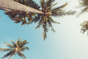 Fototapete - Vintage nature background - coconut palm tree on tropical beach blue sky with sunlight of morning in summer, uprisen angle. vintage instagram filter