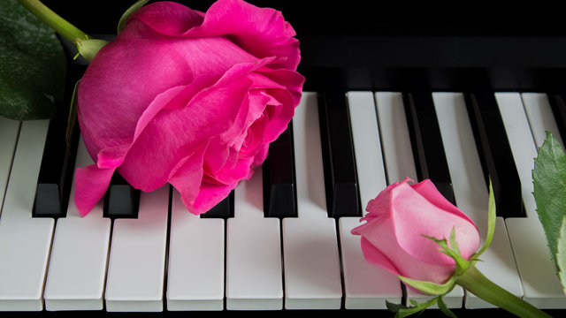 Pink roses on the piano. A big flower and a small Bud. Romance, celebration, postcard. Mother's day, Birthday, March 8, Valentine's day. Attention, Date, Love, Art.