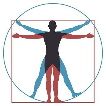 Vitruvian man. Leonardo da vinci human body perfect anatomy proportions in circle and square. Vector silhouette