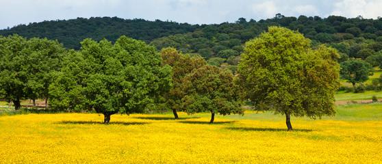 Foto auf Acrylglas Südeuropa Spring, Garciaz, Las Villuercas, Caceres, Extremadura, Spain, Europe