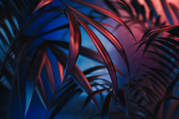 Tropical plants on blue and red neon background. empty space. 3D rendering. Wall mural