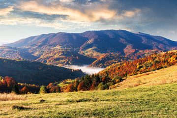 beautiful autumn morning scenery in mountains. fog rising in the valley. mixed forest in fall foliage. weathered grass on the hillside meadows. clouds on the sky. conventional carpathian countryside