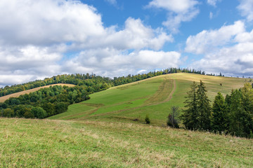 forest in mountains on a sunny day. warm weather at the beginning of autumn season. path uphil through grassy meadow. dynamic cloud formations on the sky. conventional carpathians