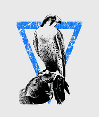 hawk illustration, tee shirt print