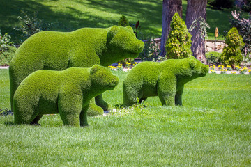 bears created from bushes at green animals. Topiary gardens Wall mural