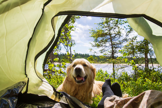 Tourist tent, dog and man. Tourist in nature.
