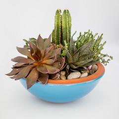 Decorative flowers cactus plants