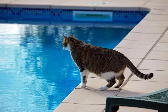 Chat au bord de la piscine