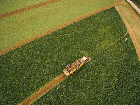 Top view of the tractor in the field of sugar beet. Aerial view