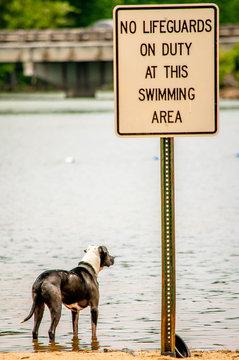 dog lifeguard
