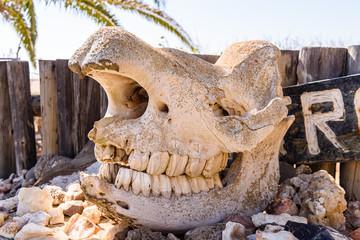 Elephant skull at Ugabmund (Ugab) Gate, entrance to the Skeleton Coast National Park, Namibia