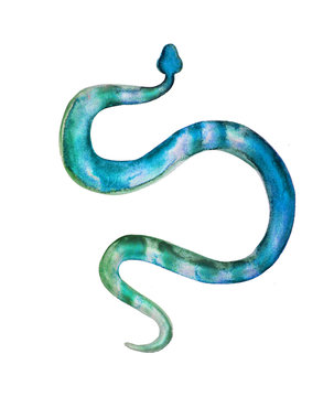 Watercolor snake illustration. Green blue hand drawn reptile isolated on white background