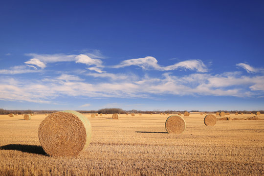 Round bails of hay in a farmers field