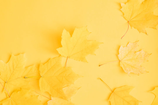 Autumn nature background. Fall yellow maple leaves over orange surface. Copy space.