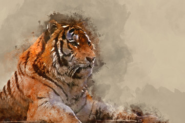 Watercolor painting of Stunning close up image of tiger relaxing on warm day