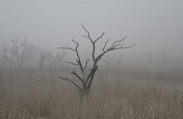 雨上がりの阿蘇にて / 霧にむせぶ白骨樹