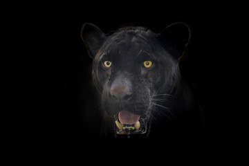 Foto auf Leinwand Panther Black Jaguar face on a black background.