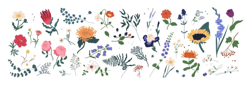 Collection of wild blooming meadow flowers isolated on white background. Bundle of wildflowers used in floristry. Set of decorative floral design elements. Flat colorful botanical vector illustration.