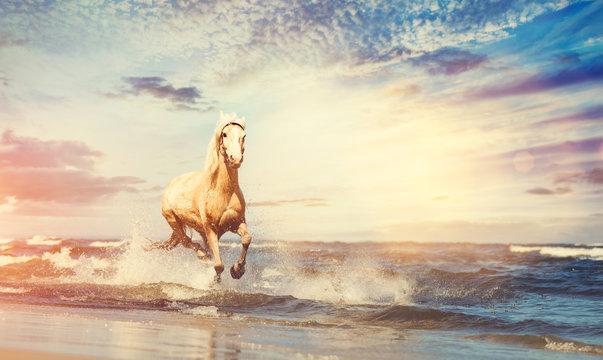 Beautiful horse galloping along the beach.