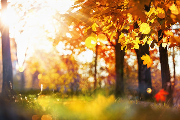 Fall Scene. Bokeh effect. Trees and Leaves in Sunlight Rays