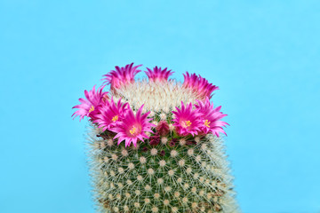 Photo sur Aluminium Cactus Cactus Green Fashion with Pink flower. Art gallery Design. Minimal Stillife. Vanilla Trendy Blue Color. Sweet Summer Style. Neon cactus Mood. Creative fashionable
