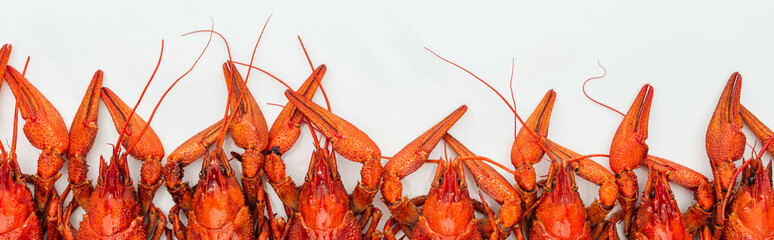 panoramic shot of red lobsters heads on white background