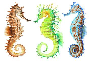 Colorful seahorses, hand drawn watercolor.